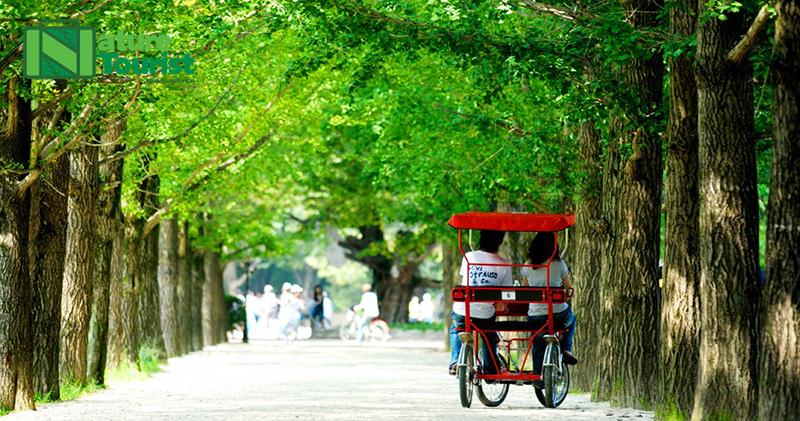 Đạp xe đạp đôi cùng người yêu thương trên con đường rợp bóng mát của 2 hàng cây xanh ven đường, còn gì thú vị hơn nữa nhỉ?