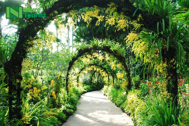 mot-trong-nhung-loi-di-o-botanic-gardens-cu-ngo-nhu-xu-so-than-tien